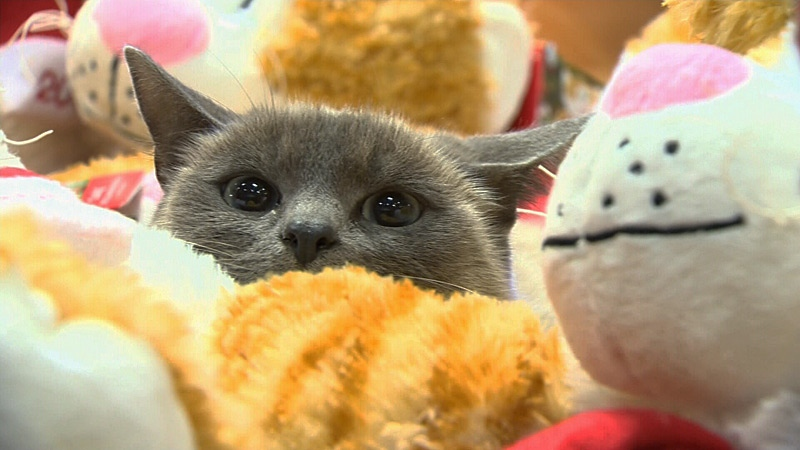 Petsmart Edmonton Cats For Adoption