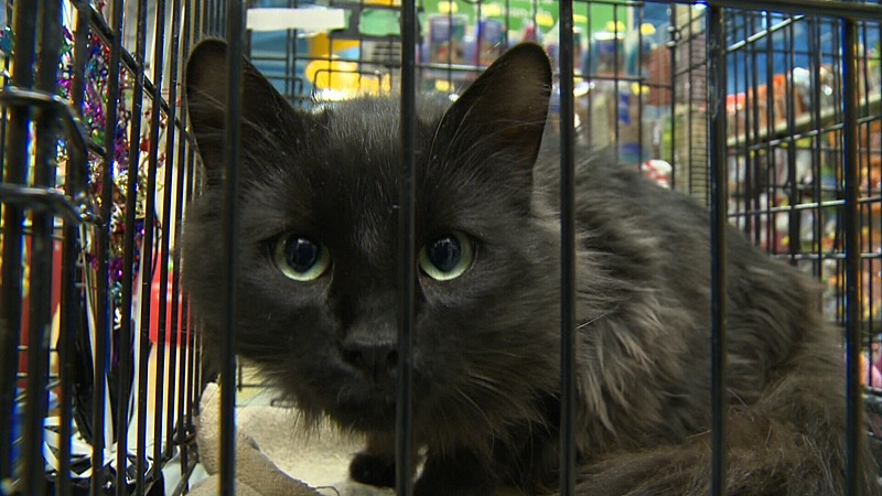 Petsmart Edmonton Cats For Adoption