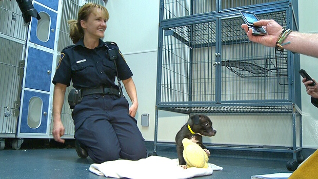 Animal Control Officer Mariann Ragac is helping look after Charles, who playfully posed for pictures on Tuesday afternoon at the Edmonton Animal Control Centre.