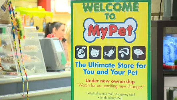 CTV News has learned that the West Edmonton Mall and Londonderry Mall locations of a new pet store called My Pet, are owned by the former president of PJ's Pets.
