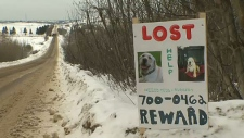 Lost dogs