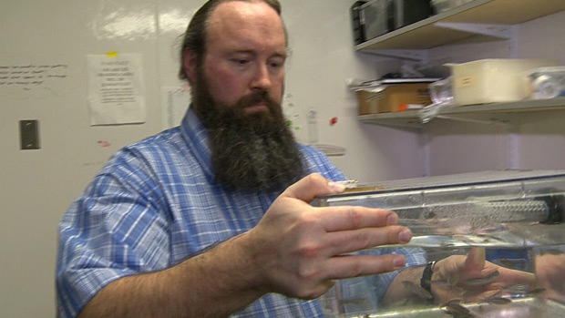 University of Alberta researcher Ted Allison has conducted successful tests on zebrafish, which could help cure some eye afflictions in humans.