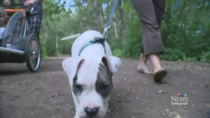 CTV Edmonton: Pit bull owners standing by  breed