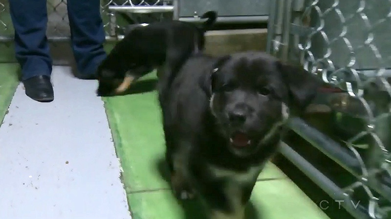 The two rescue puppies, along with their seven littermates, will soon be up for adoption.