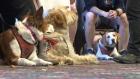 PTSD dogs