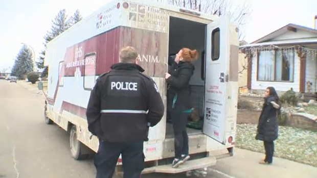 Edmonton Humane Society staff and an officer at the scene of a north side home, where a number of puppies were seized on November 30.