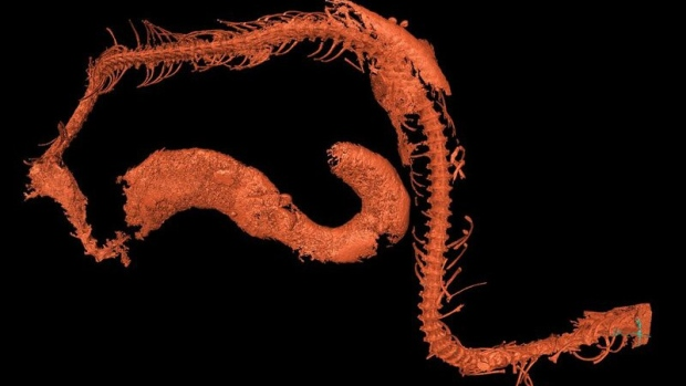 Fossilised snake embryo found in 105 million-year-old amber