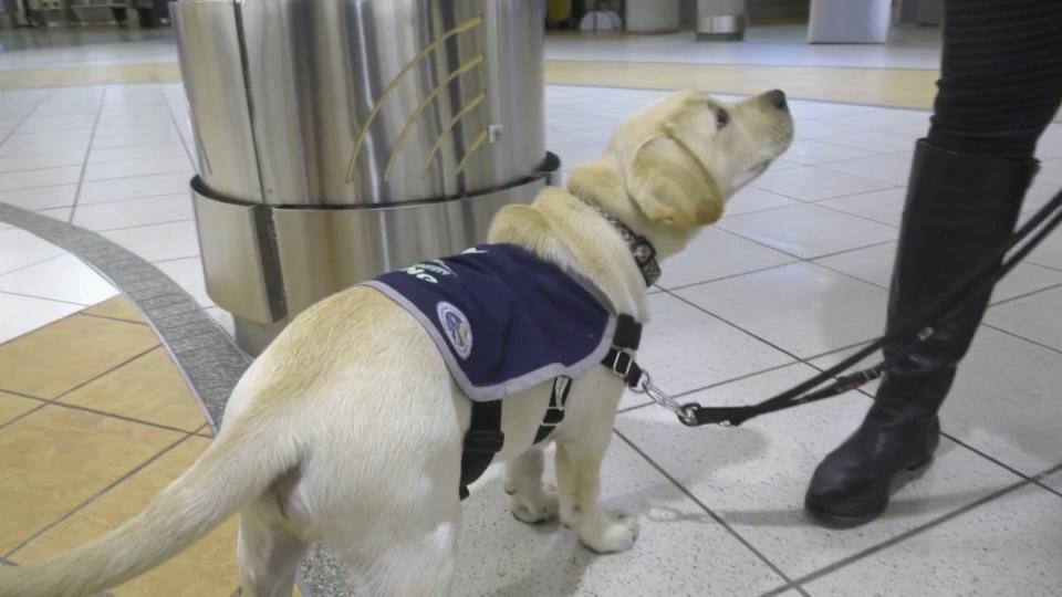 YEG the dog