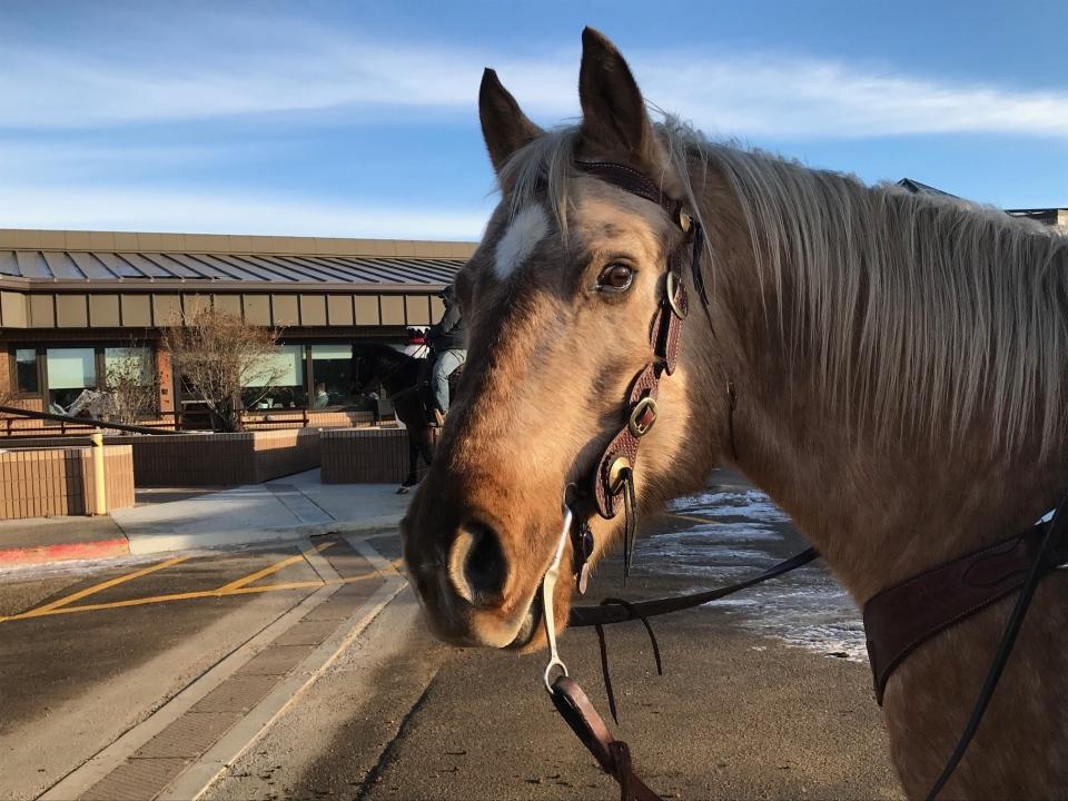 Horse Heroes Alberta